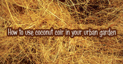 Coconut Coir: What it is and How to Use It in Your Urban Garden