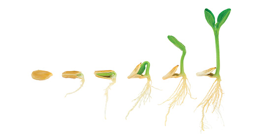 How-to-grow-plants-with-stronger-stems,-roots-and-blooms-using-coir-as-a-soil-conditioner